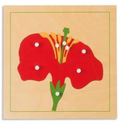 Ботанически пъзел: Цвят