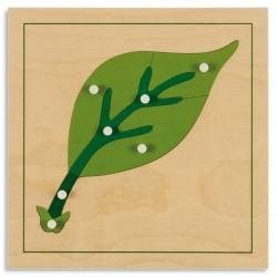 Ботанически пъзел: Лист