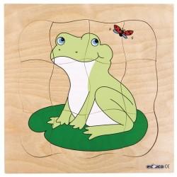 Пъзели, представящи растежа: жаба
