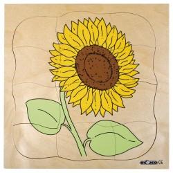 Пъзели, представящи растежа: слънчоглед